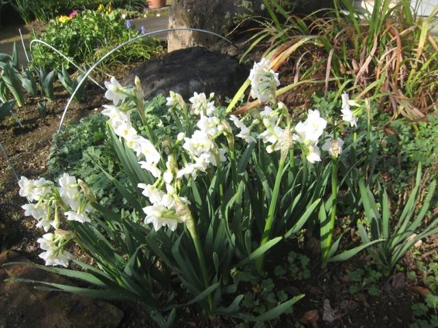 春の花2 007 (640x480)