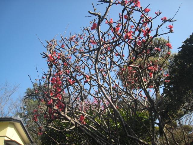 春の花2 005 (640x480)