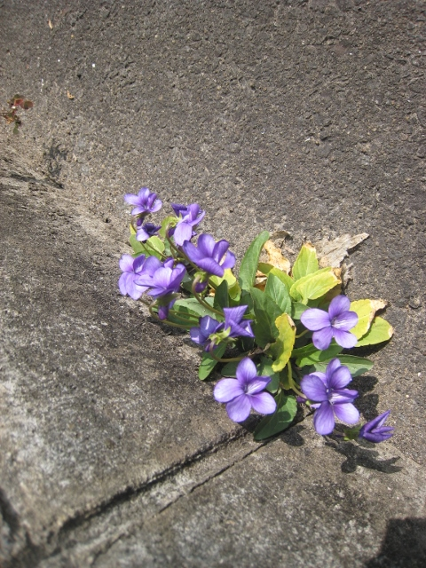 春の花3 001 (480x640)