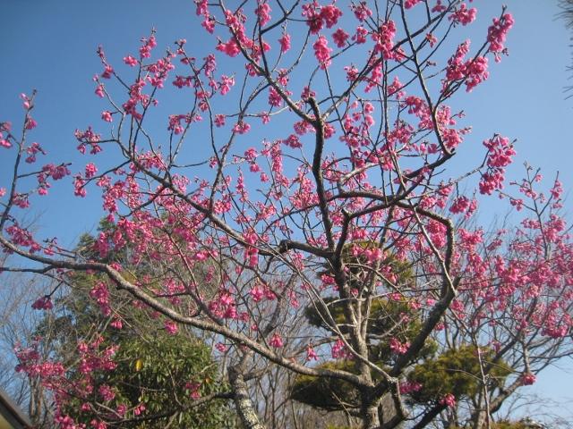 春の花2 001 (640x480)