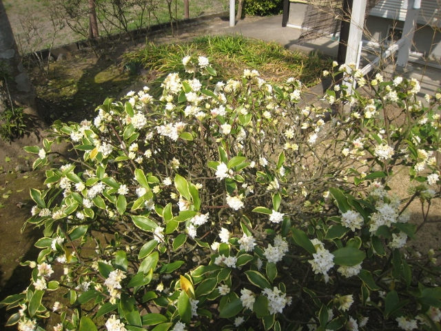 春の花3 006 (640x480)