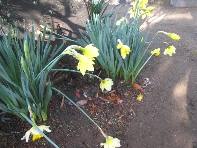 春の花2 009 (640x480)