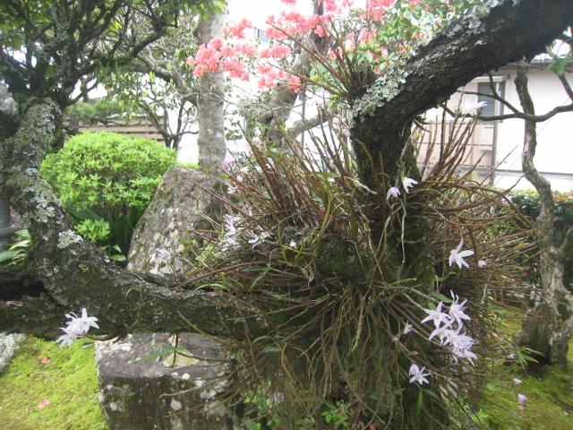 庭の花4 012 (640x480)