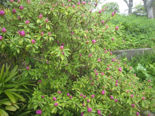 庭の花4 003 (640x480)