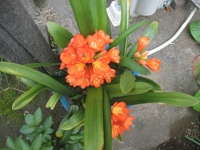 庭の花4 011 (640x480)