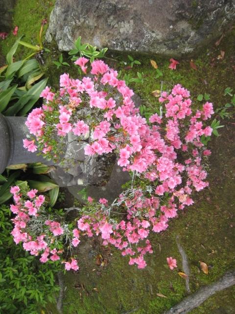 庭の花4 004 (480x640)