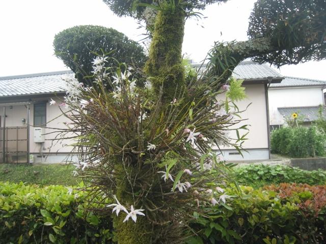 庭の花4 013 (640x480)