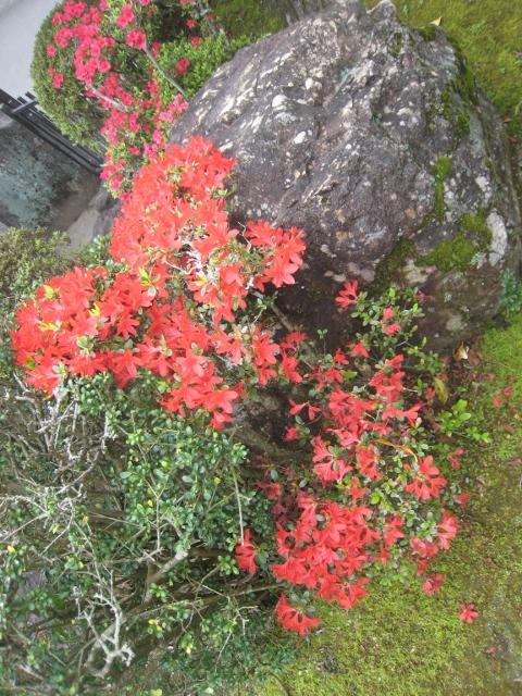 庭の花4 006 (480x640)