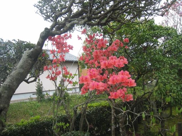 庭の花4 008 (640x480)