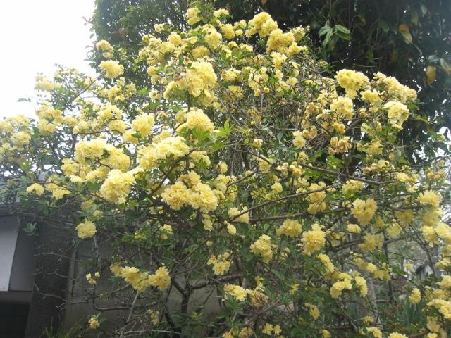 庭の花4 010 (640x480)