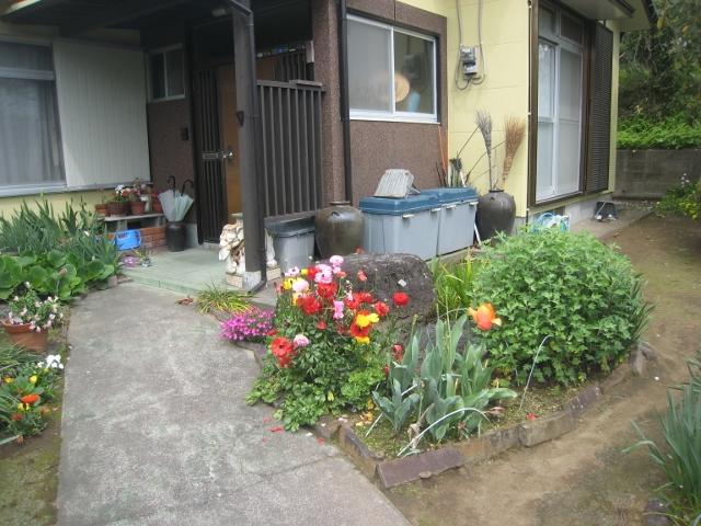 庭の花4 019 (640x480)